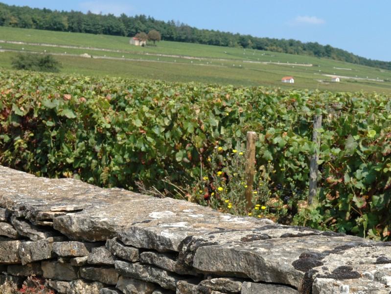 viticulture vin et pierre de bourgogne carte bassins de pierres carte des vignobles bourgogne. Black Bedroom Furniture Sets. Home Design Ideas